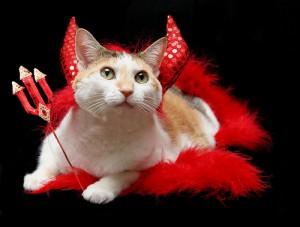 Prissy devil